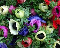 Flowers02_3