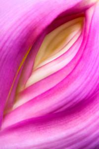 Flower_vagina